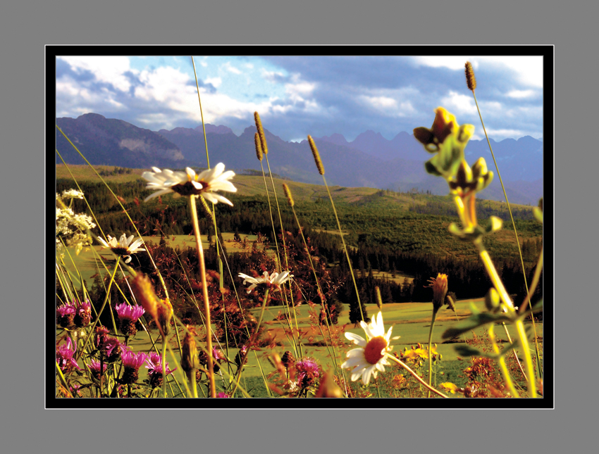 1 - Poézia kvetov I
