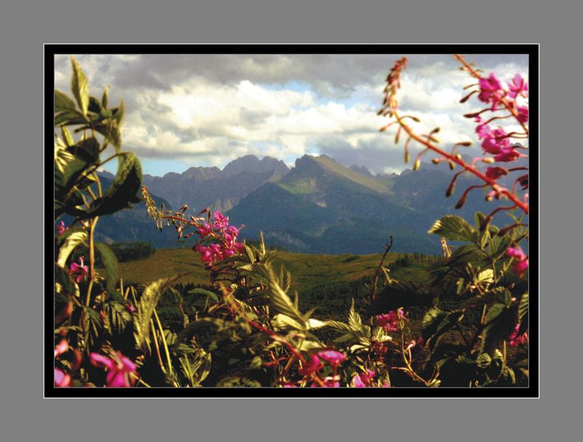 2 - Poézia kvetov II