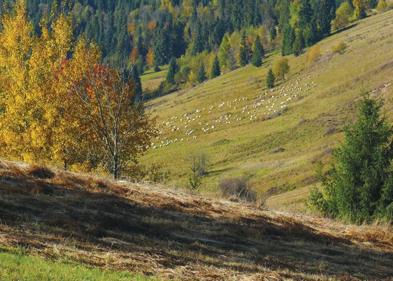 102 - Jesenná pastva