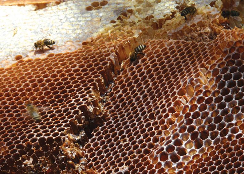 134 - Včely