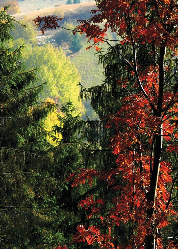 148 - Z jesenného lesa