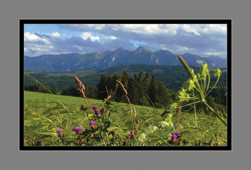 198 - Letná krajina