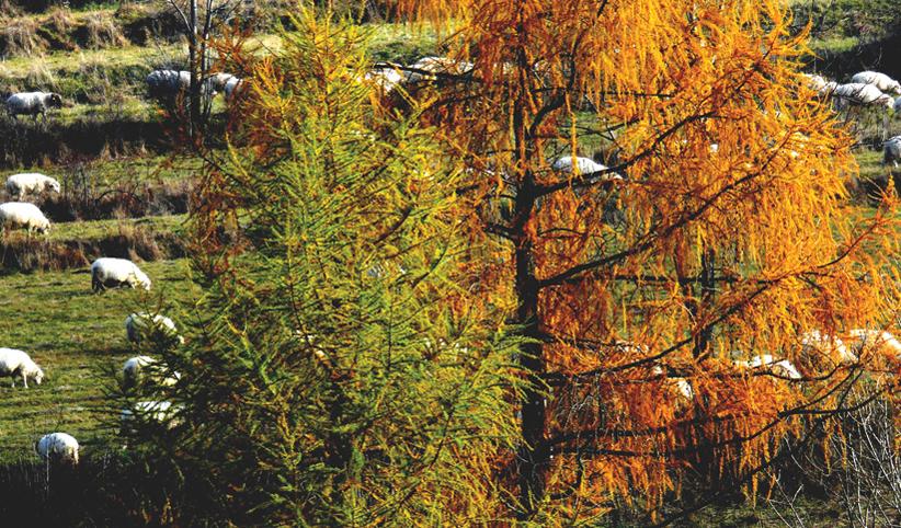 169 - Jesenné stádo